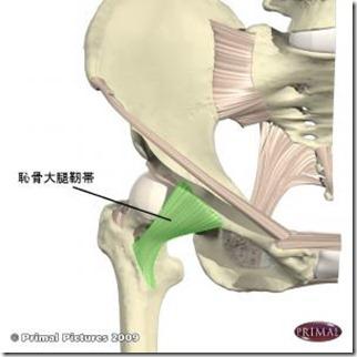 股関節痛み原因治療 恥骨大腿靭帯