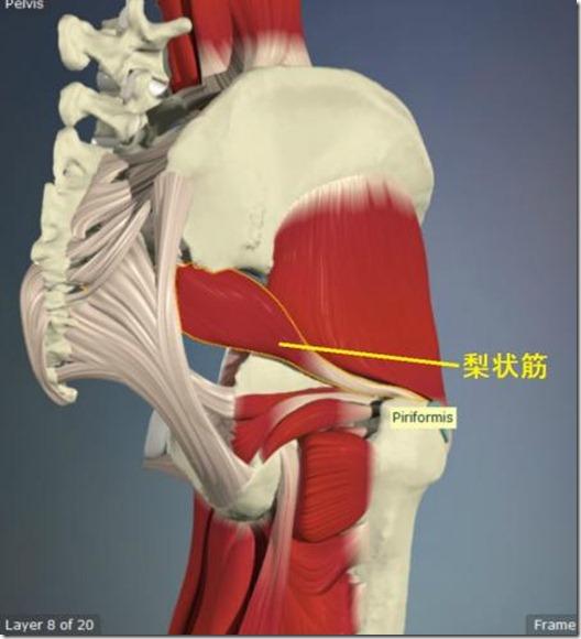 股関節痛み原因治療 梨状筋4.5