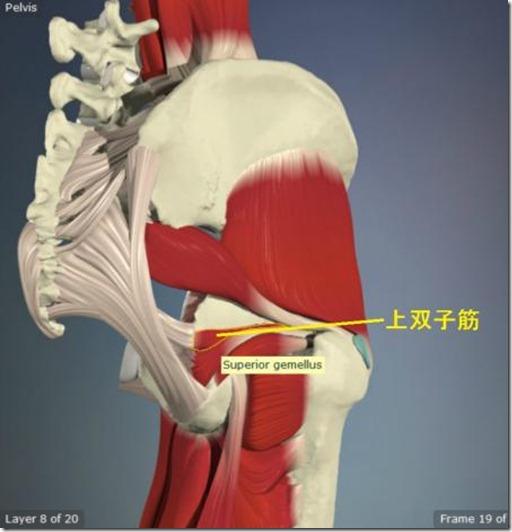 股関節痛み原因治療 上双子筋4.5