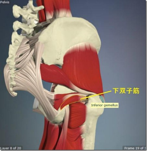 股関節痛み原因治療 下双子筋4.5