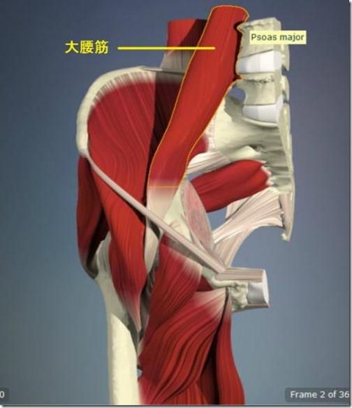 股関節痛み原因治療 大腰筋4.5