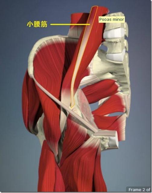 股関節痛み原因治療 小腰筋4.5