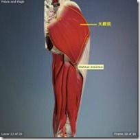 股関節痛み原因治療 大殿筋2