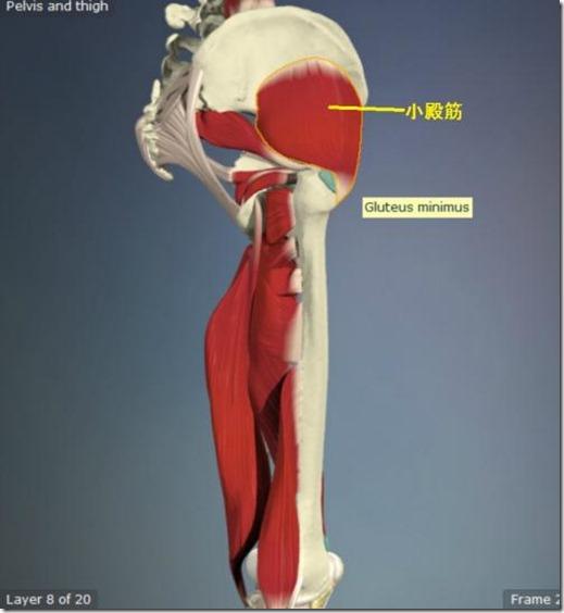 股関節痛み原因治療 小殿筋5