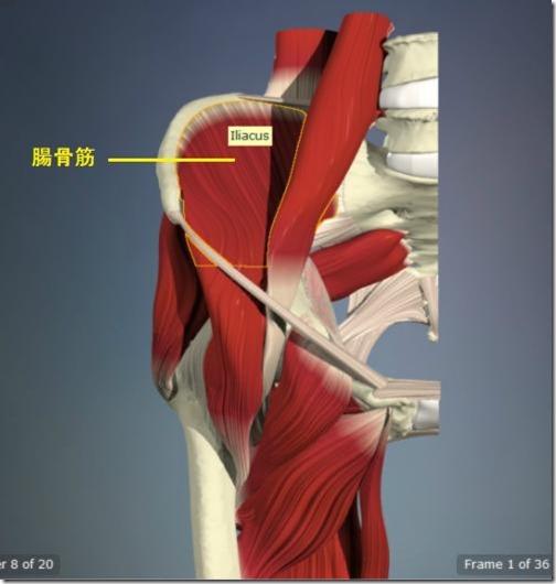 股関節痛み原因治療 腸骨筋5