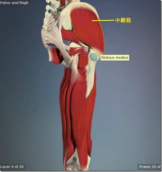 股関節痛み原因治療 中殿筋5