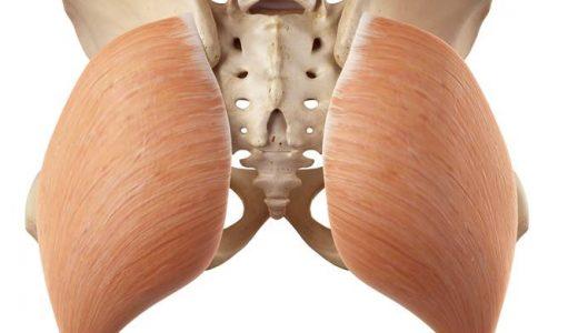 殿筋(大殿筋、中殿筋、小殿筋)の解剖と作用をイラストで解説