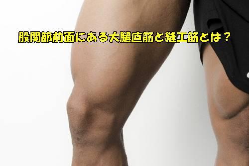 股関節前面にある大腿直筋と縫工筋とは?解剖を図を用いて詳しく解説23