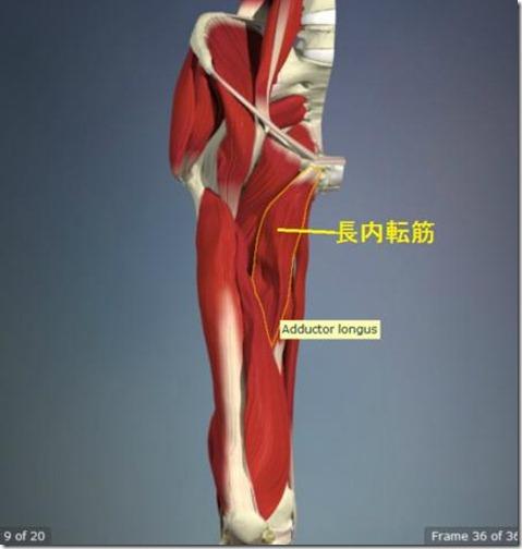 股関節痛み原因治療 長内転筋4.5