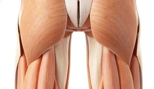 股関節における二関節筋のまとめ