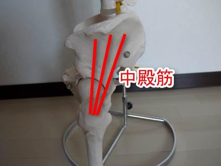 股関節の模型全体図2