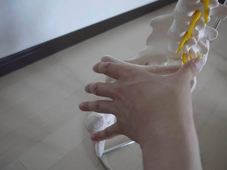 股関節の模型全体図3