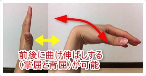 手首の動き掌屈と背屈