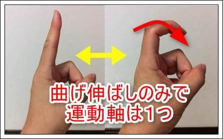 指は屈曲伸展のみ
