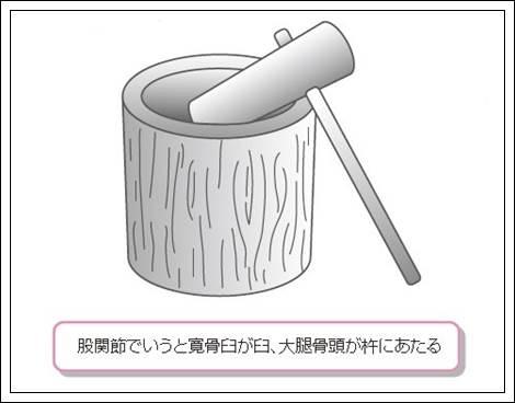 股関節の解剖機能形態2