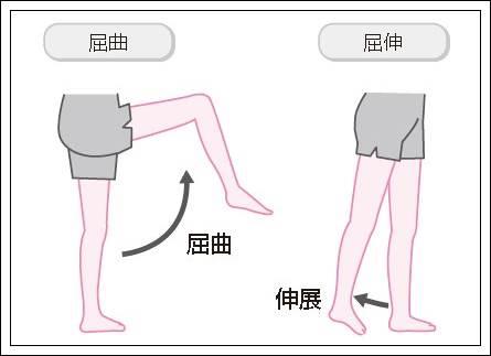 股関節の屈曲と伸展イラスト