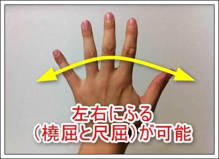 手首の動き橈屈と尺屈