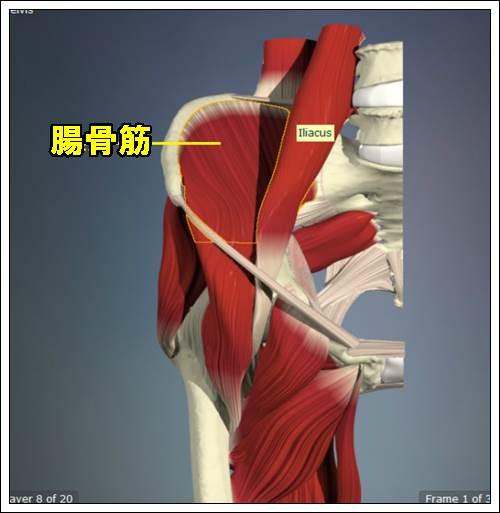 腸骨筋480