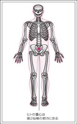 ヒトの重心の位置2