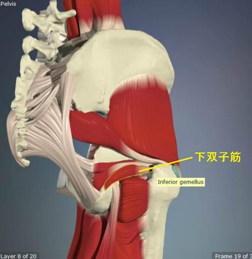 股関節外旋筋のストレッチ17