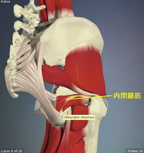 股関節外旋筋のストレッチの正しい方法15