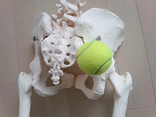 股関節外旋筋のストレッチ2