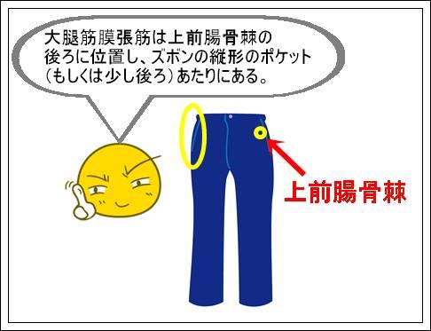 大腿筋膜張筋の説明
