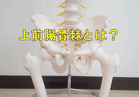 上前腸骨棘とは?場所と付着する筋肉・痛みの原因を解説