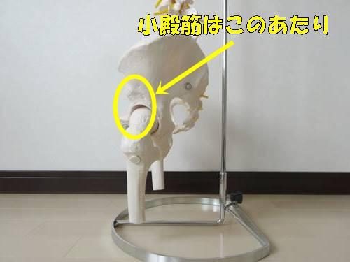 股関節内旋筋小殿筋ストレッチ9