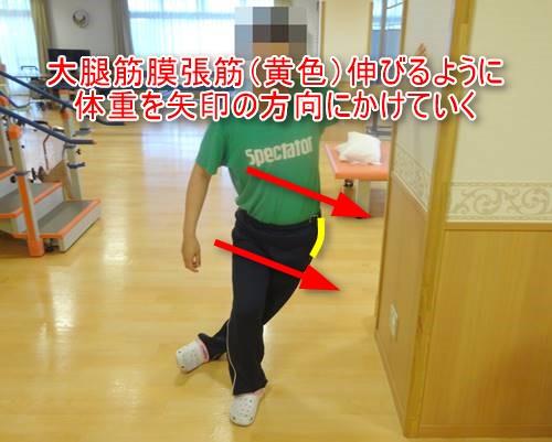 大腿筋膜張筋骨模型ダイレクトストレッチ9