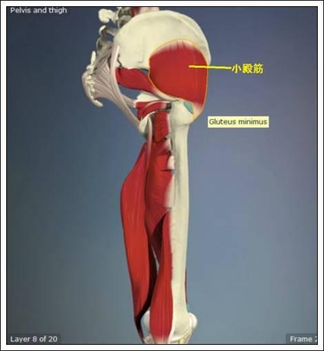 股関節痛み原因治療 小殿筋4.54.7