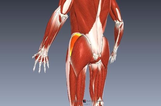 横歩きリハビリの効果と中殿筋の筋活動は?2