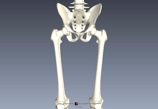 大腿骨の頚体角と前捻角とは?5