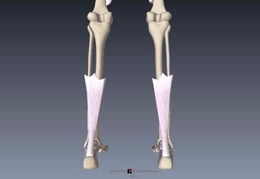 アキレス腱解剖2