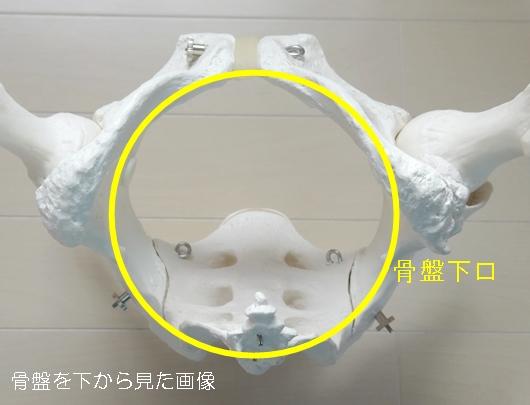 骨盤下口1