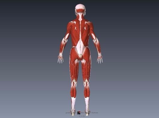 アキレス腱のストレッチ方法は?間違い例もご紹介します1