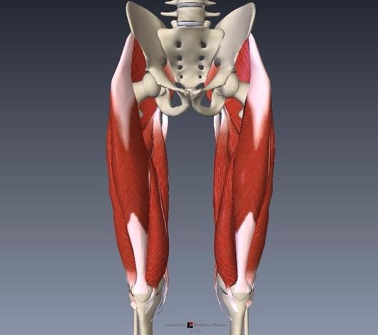 スクワットで鍛えられる筋肉