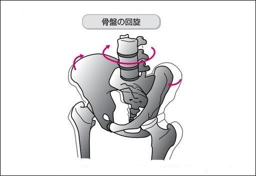 骨盤の動き 回旋