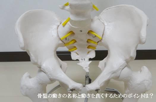 骨盤の動きの名称と動きを良くするためのポイントは?