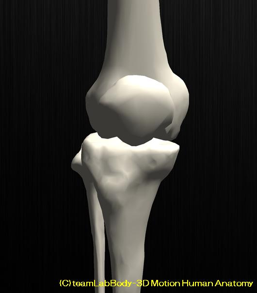 膝のお皿が割れる?膝蓋骨骨折とリハビリについて解説します2