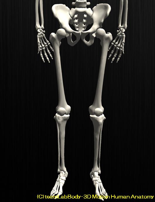 膝のお皿が割れる?膝蓋骨骨折とリハビリについて解説します