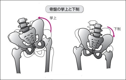 骨盤の動き挙上