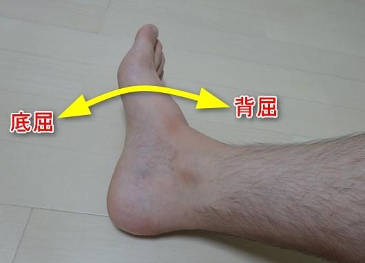 足関節底屈と背屈