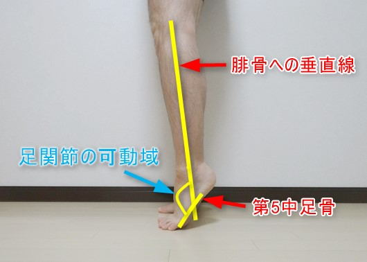 足関節の可動域測定時の基本軸と移動軸