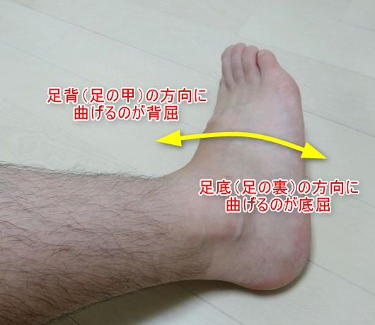 足関節の底屈と背屈1