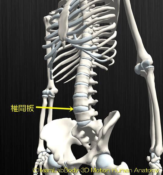 線維軟骨結合椎間板