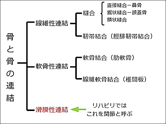 関節の種類3