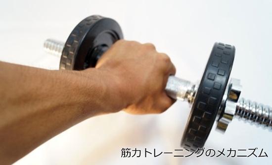 筋トレで筋力が強くなるメカニズムを理学療法士がわかりやすく解説