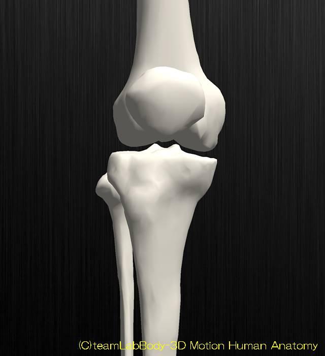 脛骨解剖近位端チューリップ