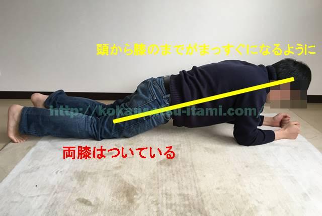 体幹トレーニング1フロントブリッジ両膝つき